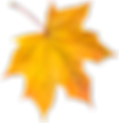 purepng.com-yellow-autumn-leafautumnleav