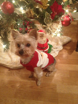 Jo Ann's Furry Friends - Christmas