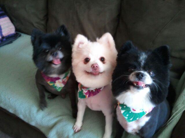 Jo Ann's Furry Friends ~ The Trio