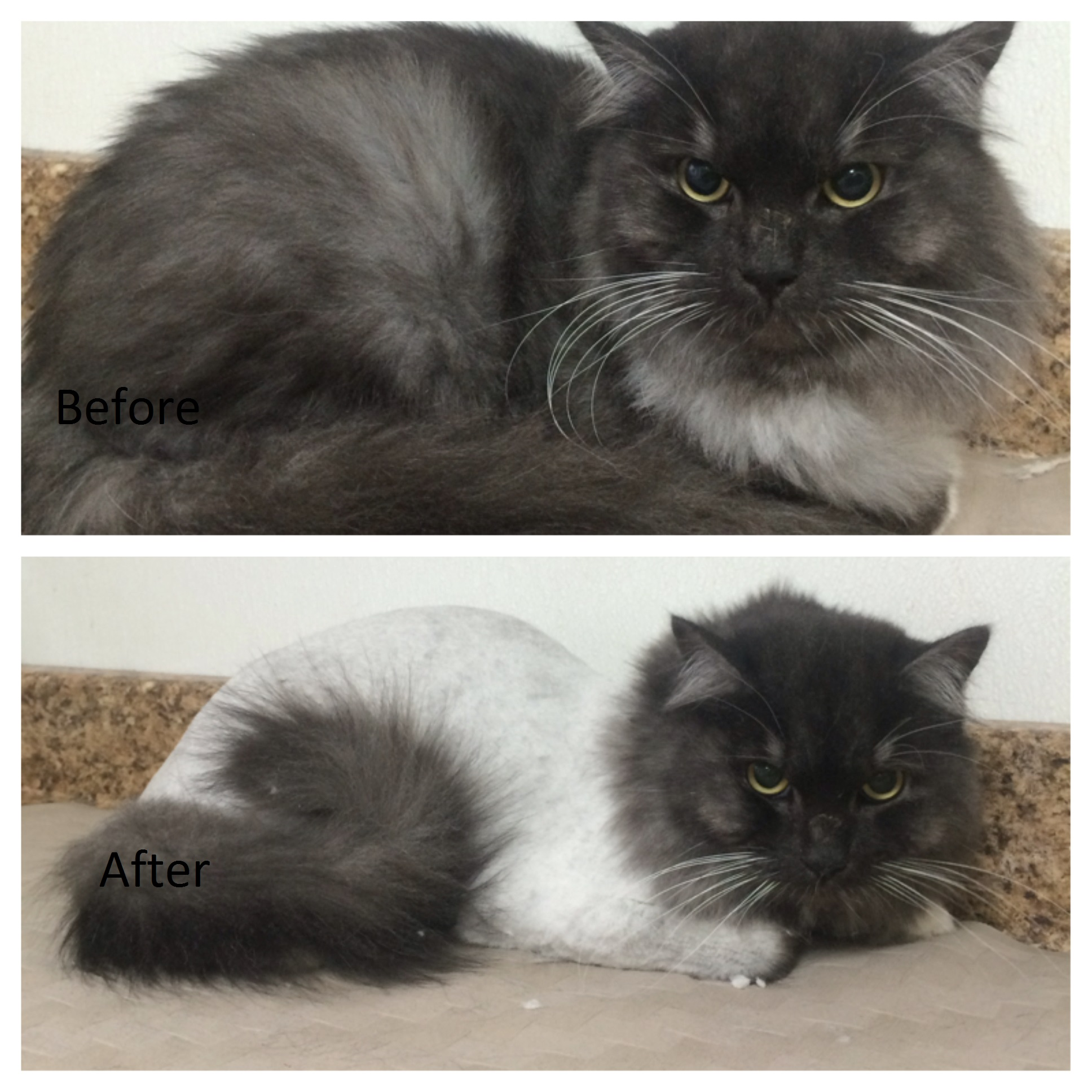 before and after.jpg