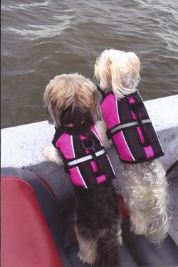 Boat dogs.jpg