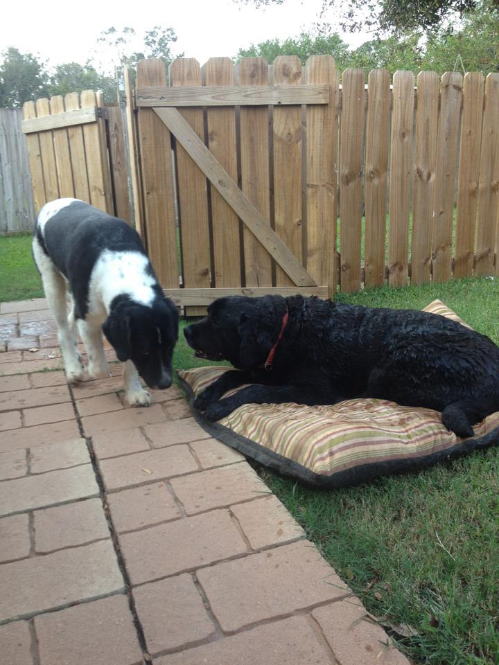 Furry Friends ~ Bryson & Athena