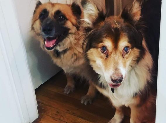 buddies Chewie & Boz