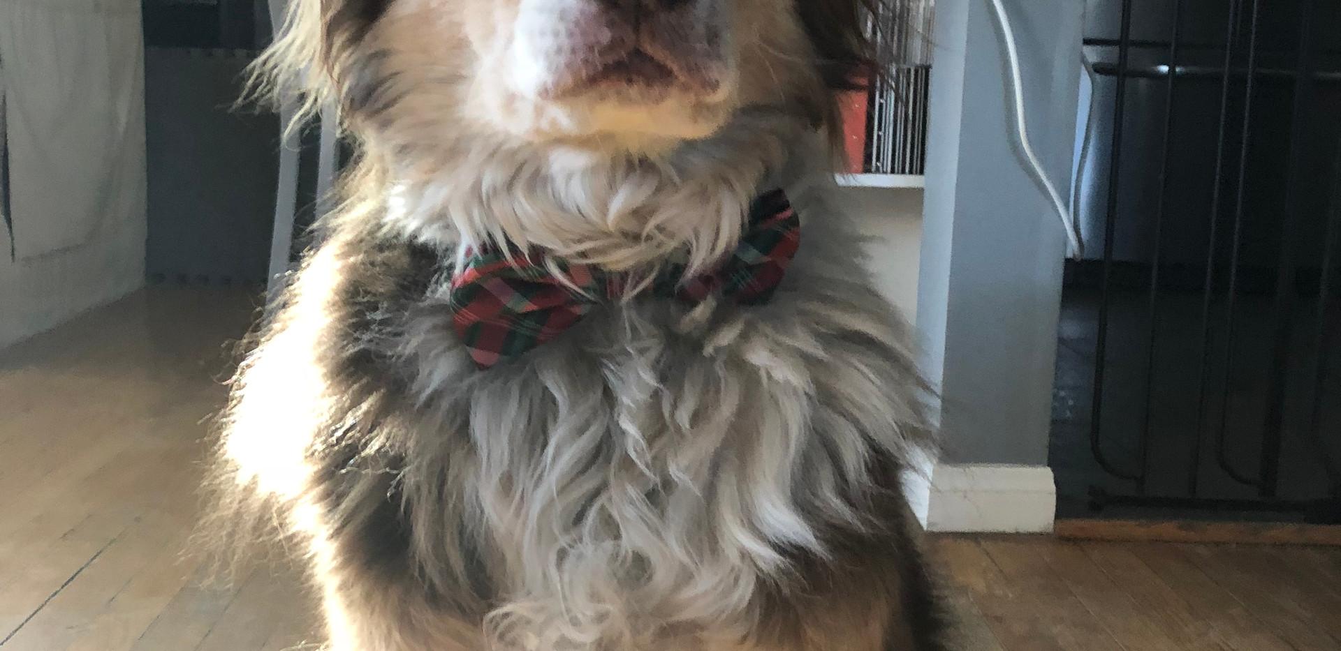 bow-tie Boz