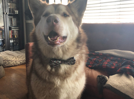bow-tie Loki