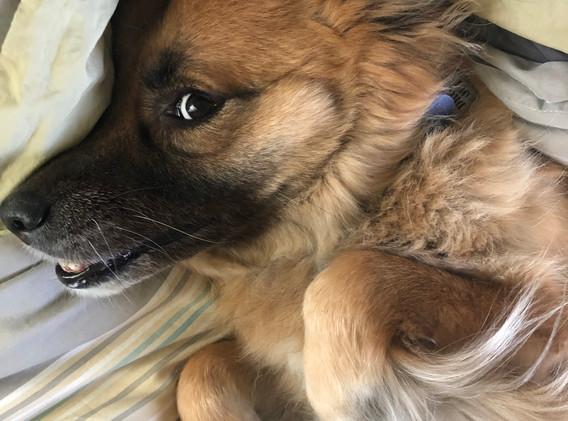 side-eye Chewie