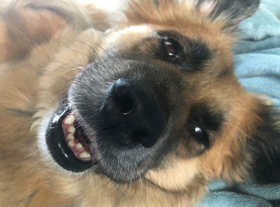 smiling Chewie