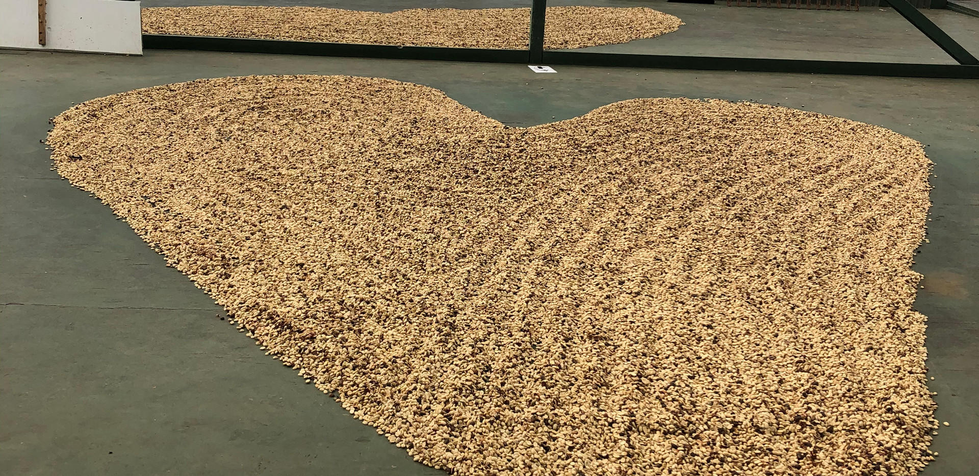 coffee plantation - Kona, Hawaii