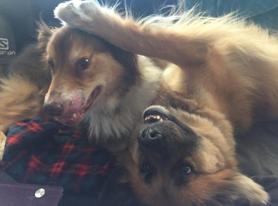Bosley & Chewie playing