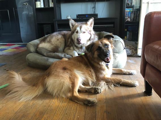 afternoon Loki & Chewie