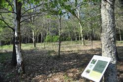 Bosque de Alvarella