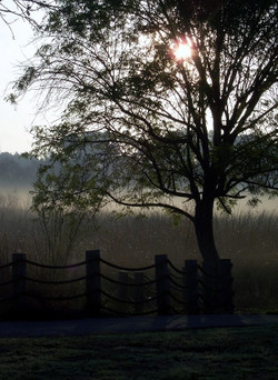 Sunlight, mist and trees