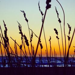 Manhattan Beach reeds