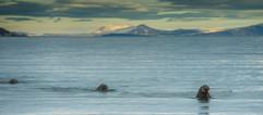 Svalbard (951 of 2555).jpg