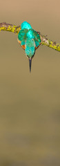 Worcs Kingfishers-0002.jpg