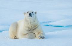 Svalbard (650 of 2555).jpg