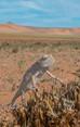 NAMIBIA D4T-0037-Edit.jpg