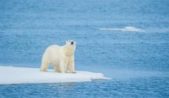 Svalbard (694 of 2555).jpg