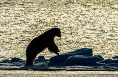 Svalbard (732 of 2555)-Edit.jpg