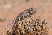 NAMIBIA D4T-0024.jpg