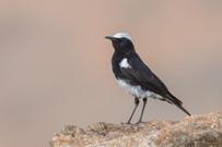 NAMIBIA D4K-0015.jpg