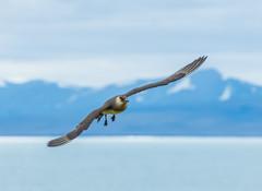 Svalbard (2315 of 2555).jpg