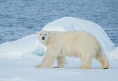 Svalbard (684 of 2555).jpg