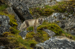 Svalbard (2403 of 2555).jpg