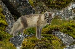 Svalbard (2403 of 2555)-2.jpg
