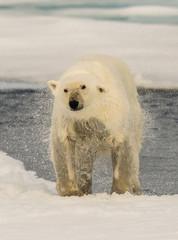 Svalbard (1417 of 2555).jpg