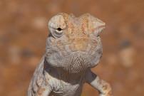 NAMIBIA D4T-0028-2.jpg