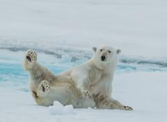Svalbard (1684 of 2555).jpg