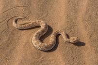 NAMIBIA D4T-0011.jpg