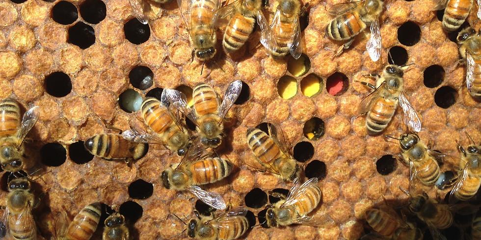 Meet the Bees at the Elgin Eastside Neighborhood Garden