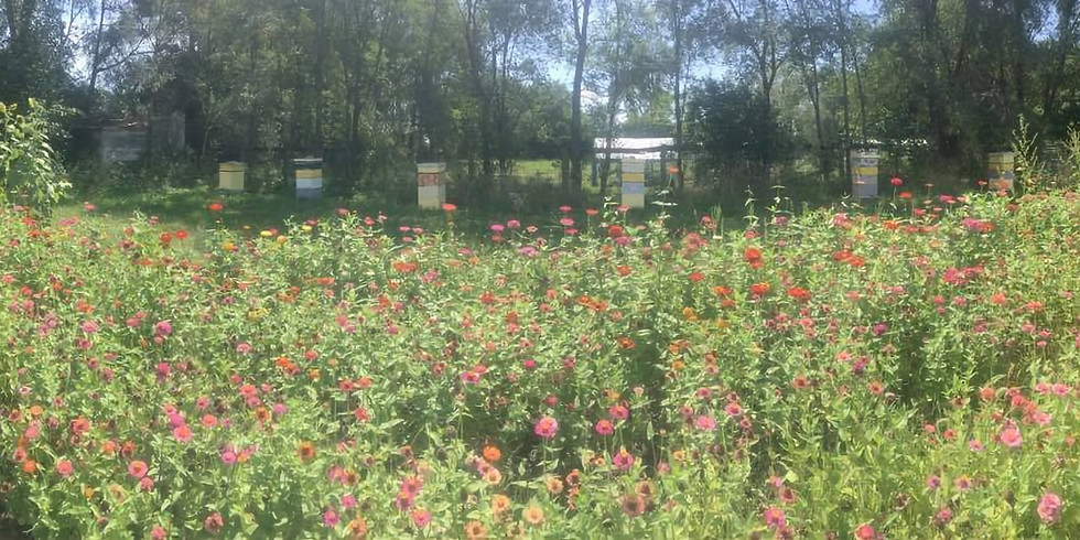 Three Bees at Broadview Farm and Gardens - McHenry County Farm Stroll