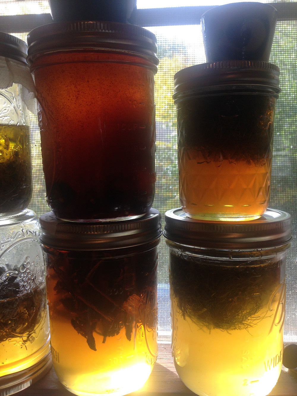 Slow solar infusions fill the window in my kitchen