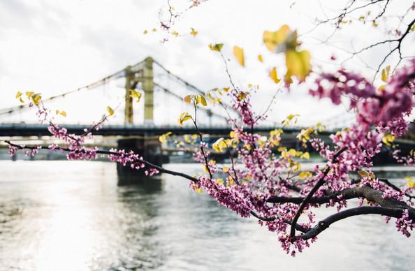 City of spring