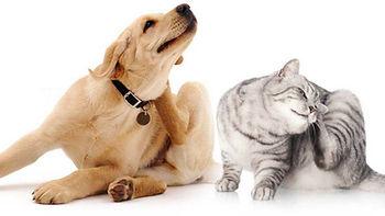 gatto-cane-1280x720.jpg