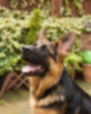Pet portrait 1.jpg
