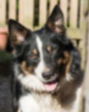 pet portrait 6.jpg