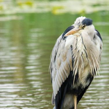 My pond!