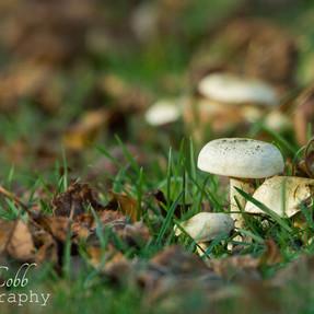 Park fungi