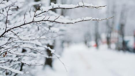 [保健新知]                                                「大雪」冬令進補最佳時機