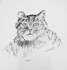Pen and ink cat.jpg