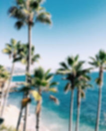 palm tree background.jpg