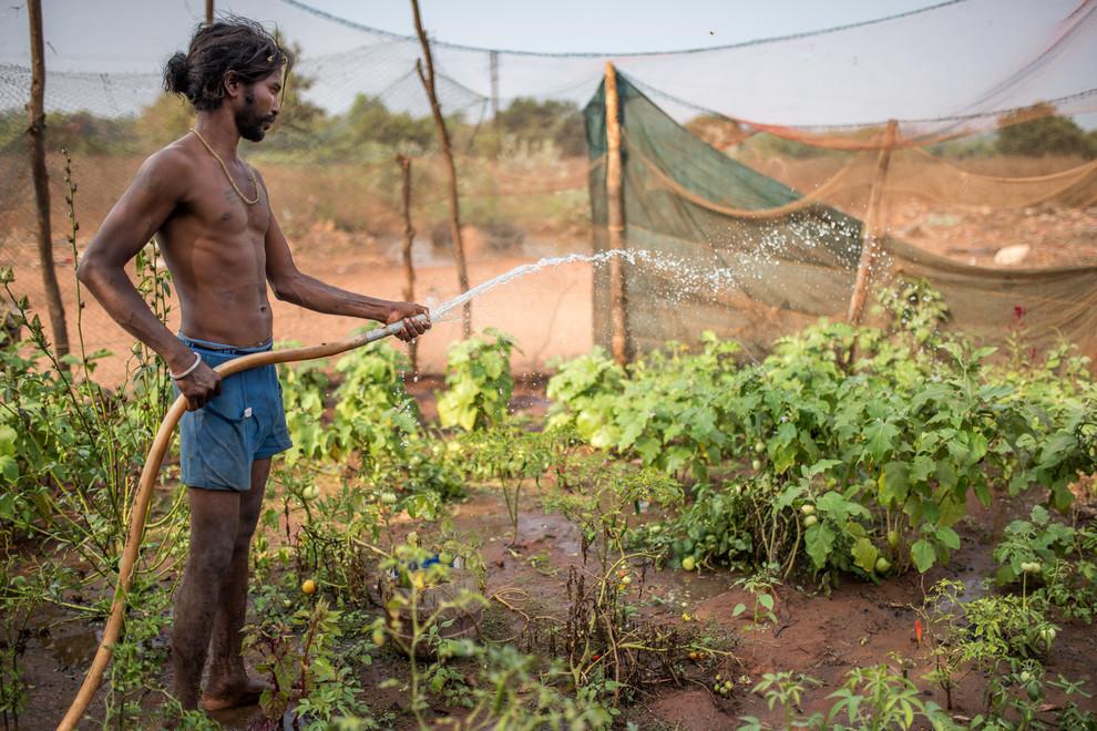 Grâce aux compétences d'un volontaire, quelques gitans ont appris à cultiver la terre. Contre toute attente, un jardin potager a pu voir le jour dans le camp.