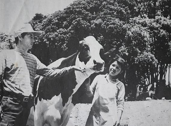 牛のミリー