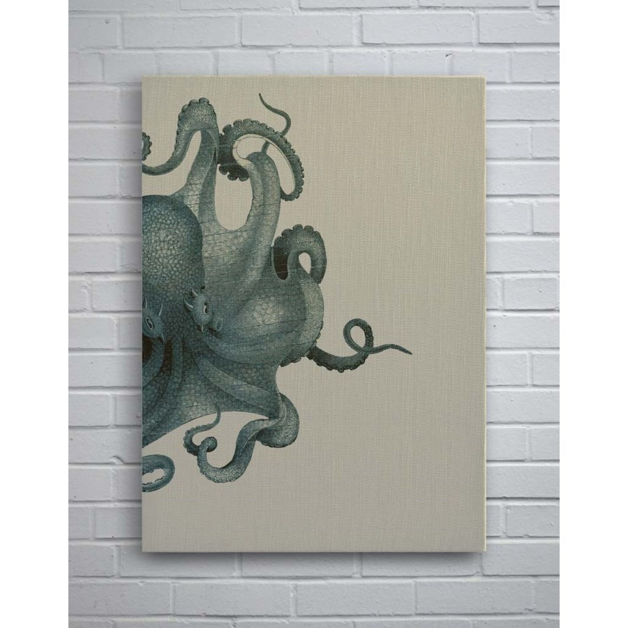 octopus with study blue
