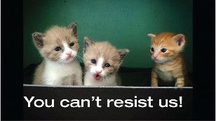 """Kittens - """"You can't resist us!"""""""