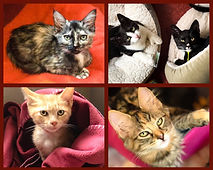 Adoption Photo Collage.jpg